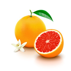 Grapefruit with half and flower on white background