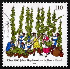 Postage stamp Germany 1998 German Cultivation of Hops