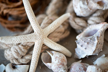 Seashell and Starfish Leaning Against Rope