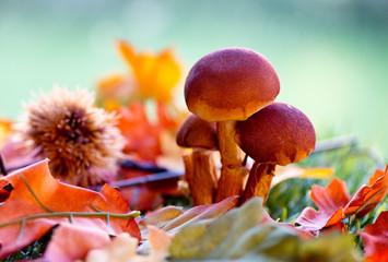 Close Up of Mushrooms Amongst Autumn Foliage