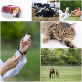 Fototapeta Veterinary care collection