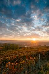 Vigne al tramonto in autunno