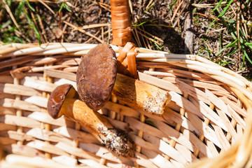 Two mushrooms in basket