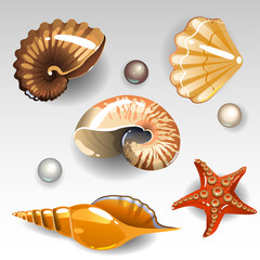 Seashells set