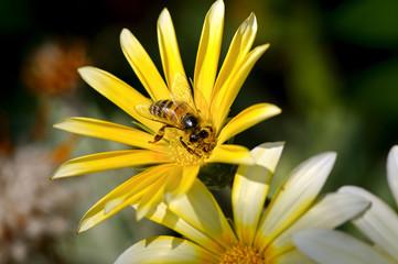 bee on a beautiful flower