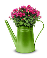 Green retro watering can with red crysanthemum