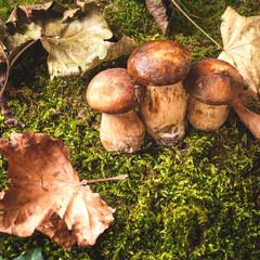 Autumn mushrooms on green moss