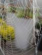 spinnennetz mit tautropfen - 70271323