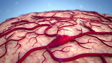 brain, Brain Model