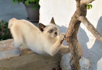 Gatto affila gli artigli