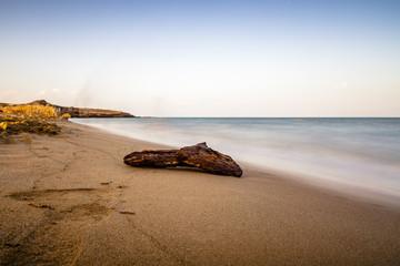 Driftwood on a beautiful beach