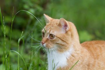 cat gets viatmins