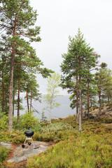 Pine trees grow on rocky hills