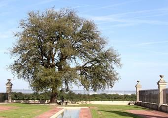 arbre centenaire dans le parc d'un château
