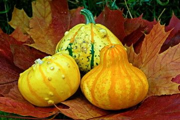Pumpkins on maple leaves in fall.