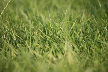close up of green grass in a field