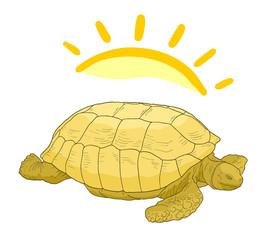 Turtle sun