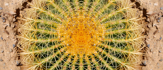 Barrel Cactus closeup.