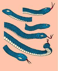 Snake vector pack