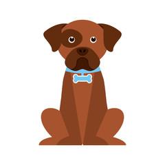 dog design