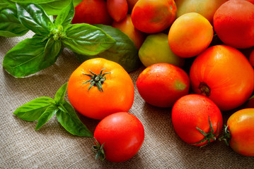 multicolored tomatoes on fabric background