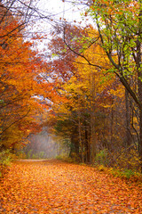Walking and biking trail through autumn trees
