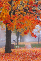 Bright autumn trees in the mist