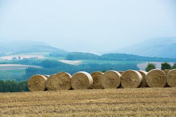 横に並んだ麦稈ロール