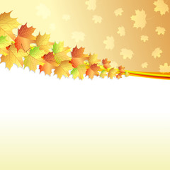 Maple leaves autumn background
