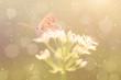Dreamy photo of butterfly on onion flower