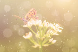 Fototapeta Dreamy photo of butterfly on onion flower