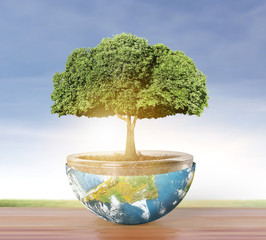 Planet earth and tree