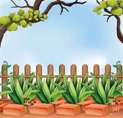 A backyard with a fence