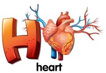 A letter H for heart