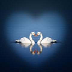 Liebe im Fokus