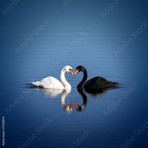 Papiers peints Oiseau Schwan Liebe