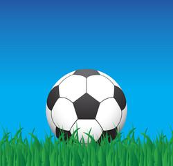 soccer ball on a grass