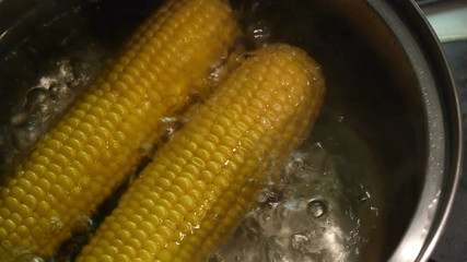 Boiled sweet yellow corn close up in pot