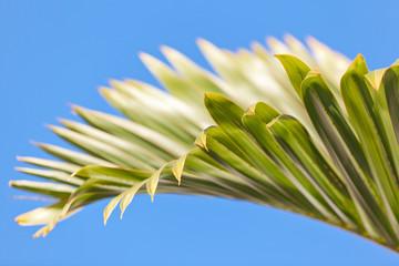 feuille de palmier bouteille