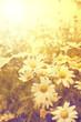 art vintage flovers background