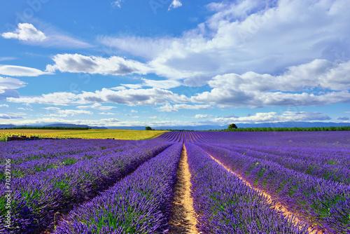 Lavender field - 70297106