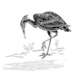 Heron bird vintage engraving vector illustration
