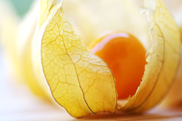 closeup of Physalis fruit