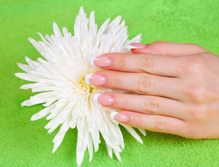 Beautiful woman's hand with french manicure on flower