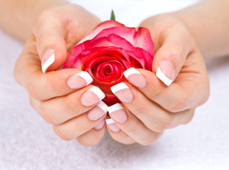Beautiful woman's hands with french manicure holding rose