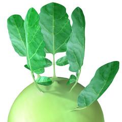 Kohlrabi (cabbage)