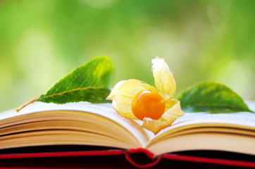 Physalis fruit on open book