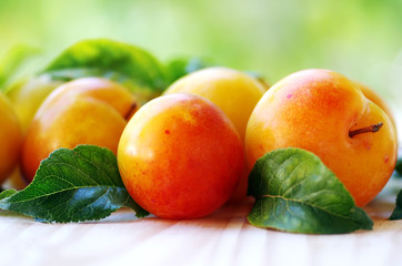 yellow plums on green background