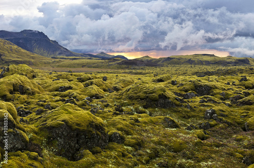 Keuken foto achterwand Noord Europa Surreal landscape with wooly moss at sunset in Iceland