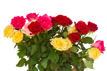 bunch  of fresh multicolored  roses